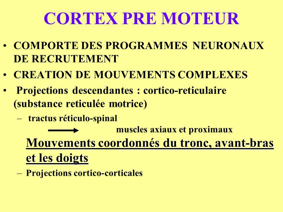 CORTEX PRE MOTEUR COMPORTE DES PROGRAMMES NEURONAUX DE RECRUTEMENT CREATION DE MOUVEMENTS COMPLEXES Projections descendantes : cortico-reticulaire (su