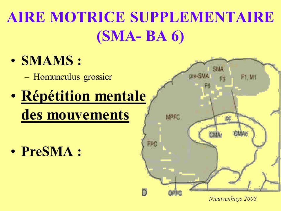AIRE MOTRICE SUPPLEMENTAIRE (SMA- BA 6) SMAMS : –Homunculus grossier Répétition mentale des mouvements PreSMA : Nieuwenhuys 2008