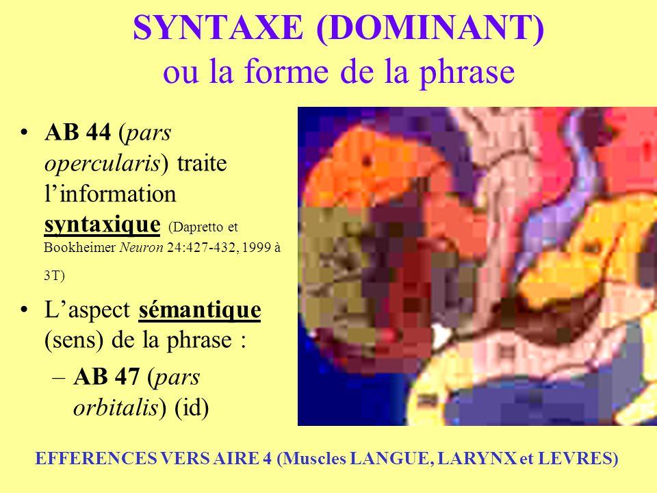 SYNTAXE (DOMINANT) ou la forme de la phrase AB 44 (pars opercularis) traite linformation syntaxique (Dapretto et Bookheimer Neuron 24:427-432, 1999 à