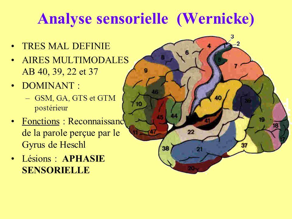 Analyse sensorielle (Wernicke) TRES MAL DEFINIE AIRES MULTIMODALES AB 40, 39, 22 et 37 DOMINANT : –GSM, GA, GTS et GTM postérieur Fonctions : Reconnai