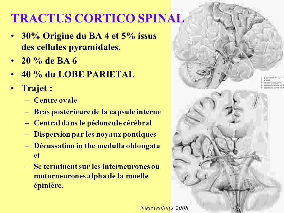 30% Origine du BA 4 et 5% issus des cellules pyramidales. 20 % de BA 6 40 % du LOBE PARIETAL Trajet : –Centre ovale –Bras postérieure de la capsule in