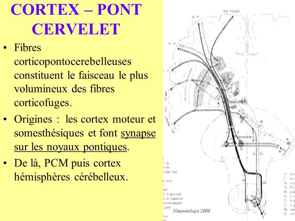 CORTEX – PONT CERVELET Fibres corticopontocerebelleuses constituent le faisceau le plus volumineux des fibres corticofuges. Origines : les cortex mote