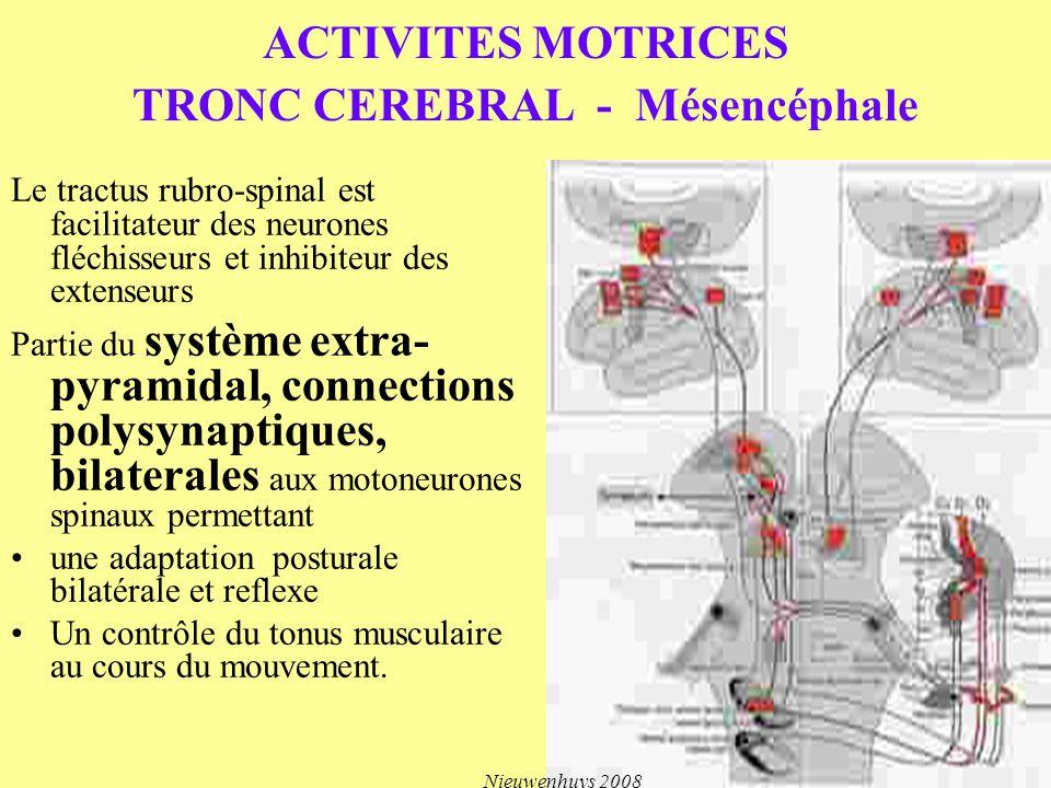 ACTIVITES MOTRICES TRONC CEREBRAL - Mésencéphale Le tractus rubro-spinal est facilitateur des neurones fléchisseurs et inhibiteur des extenseurs Parti