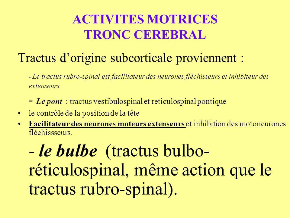 ACTIVITES MOTRICES TRONC CEREBRAL Tractus dorigine subcorticale proviennent : - - Le tractus rubro-spinal est facilitateur des neurones fléchisseurs e