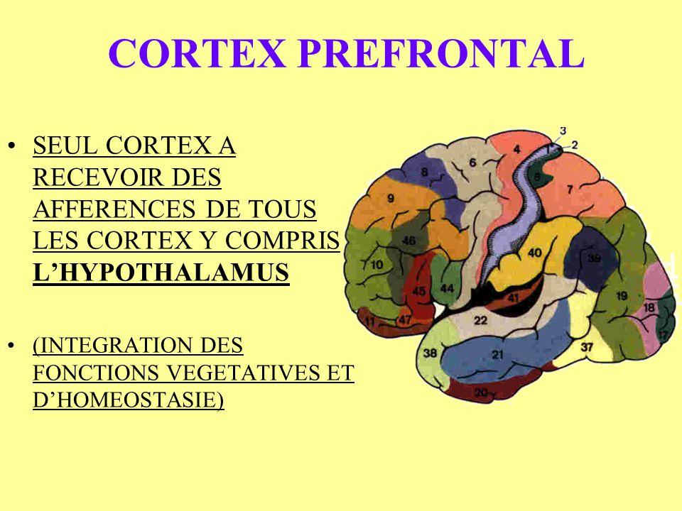CORTEX PREFRONTAL SEUL CORTEX A RECEVOIR DES AFFERENCES DE TOUS LES CORTEX Y COMPRIS LHYPOTHALAMUS (INTEGRATION DES FONCTIONS VEGETATIVES ET DHOMEOSTA