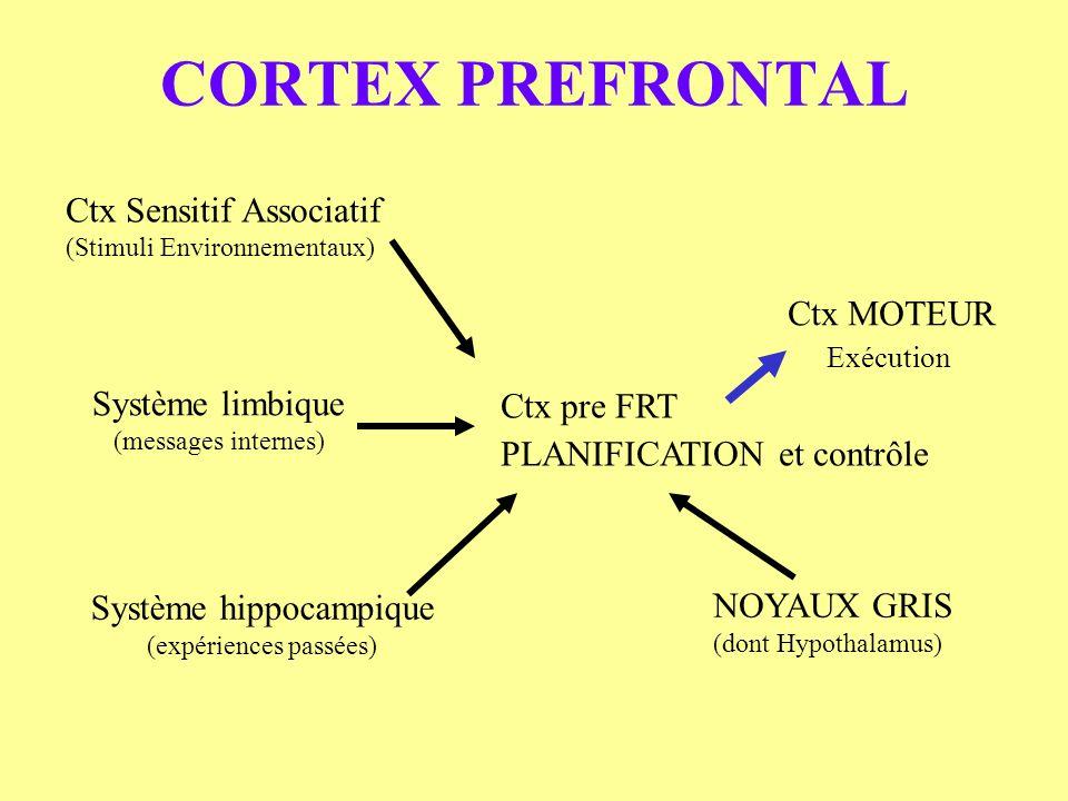 CORTEX PREFRONTAL Ctx Sensitif Associatif (Stimuli Environnementaux) Système limbique (messages internes) Système hippocampique (expériences passées)