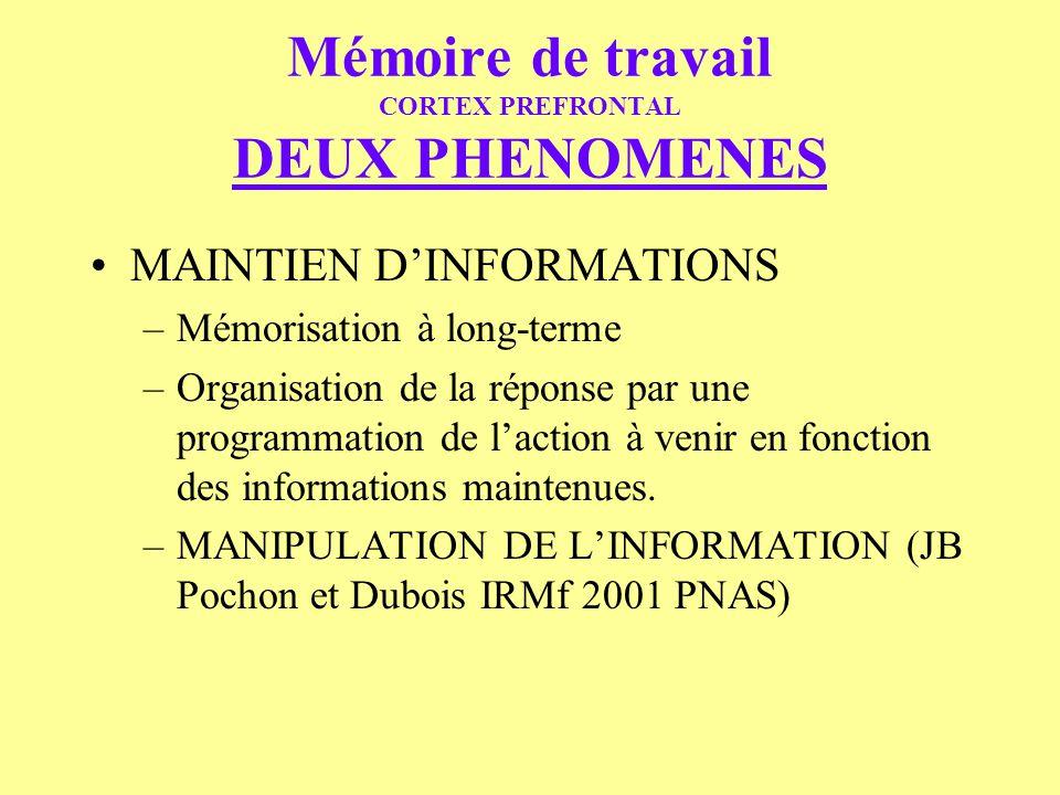 Mémoire de travail CORTEX PREFRONTAL DEUX PHENOMENES MAINTIEN DINFORMATIONS –Mémorisation à long-terme –Organisation de la réponse par une programmati