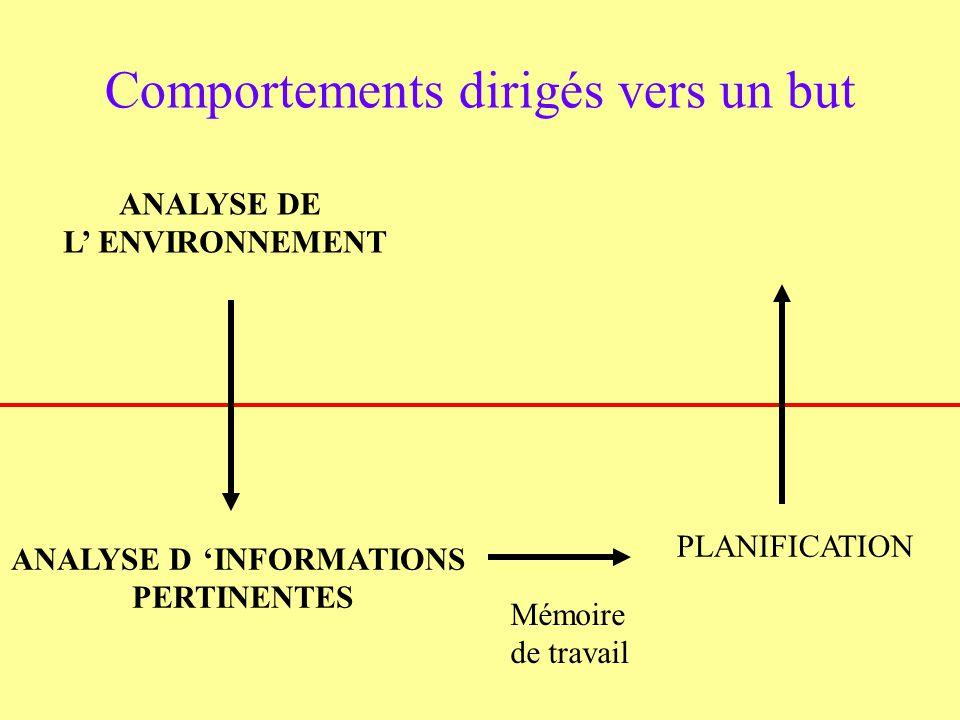 ANALYSE DE L ENVIRONNEMENT Comportements dirigés vers un but ANALYSE DINFORMATIONS PERTINENTES Mémoire de travail PLANIFICATION