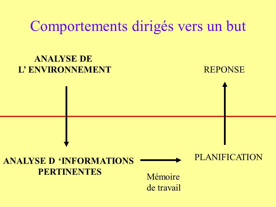 ANALYSE DE L ENVIRONNEMENT Comportements dirigés vers un but ANALYSE DINFORMATIONS PERTINENTES Mémoire de travail PLANIFICATION REPONSE