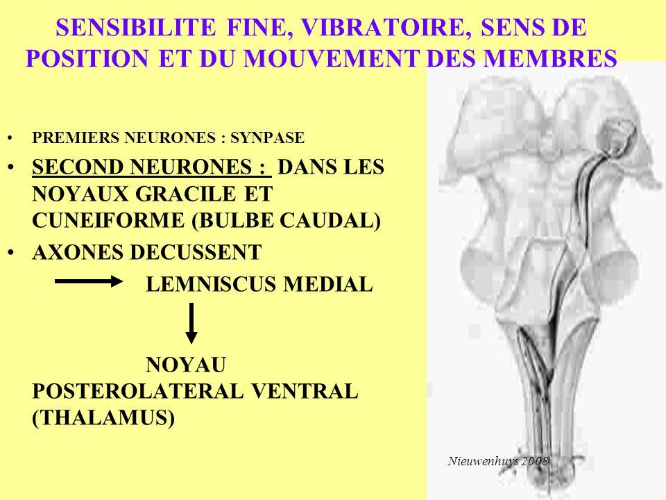 SENSIBILITE FINE, VIBRATOIRE, SENS DE POSITION ET DU MOUVEMENT DES MEMBRES PREMIERS NEURONES : SYNPASE SECOND NEURONES : DANS LES NOYAUX GRACILE ET CU