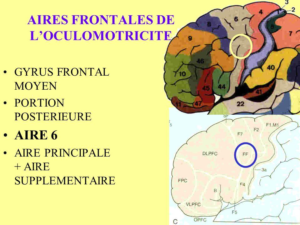 AIRES FRONTALES DE LOCULOMOTRICITE GYRUS FRONTAL MOYEN PORTION POSTERIEURE AIRE 6 AIRE PRINCIPALE + AIRE SUPPLEMENTAIRE