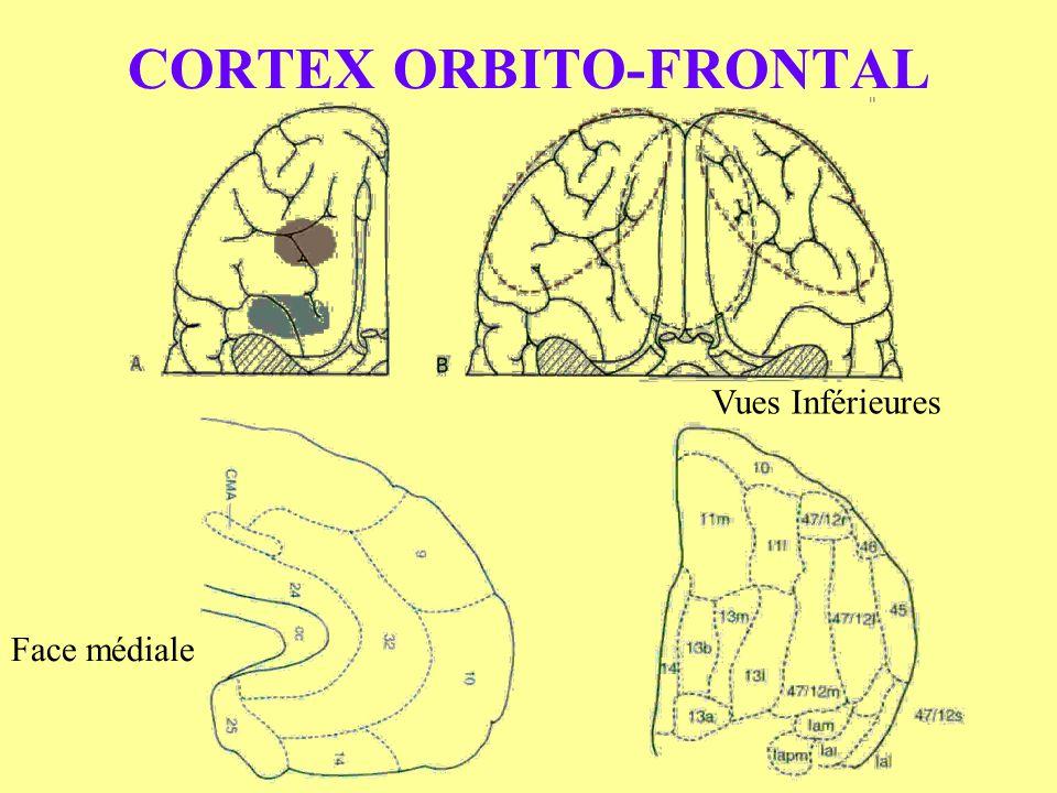 CORTEX ORBITO-FRONTAL Vues Inférieures Face médiale
