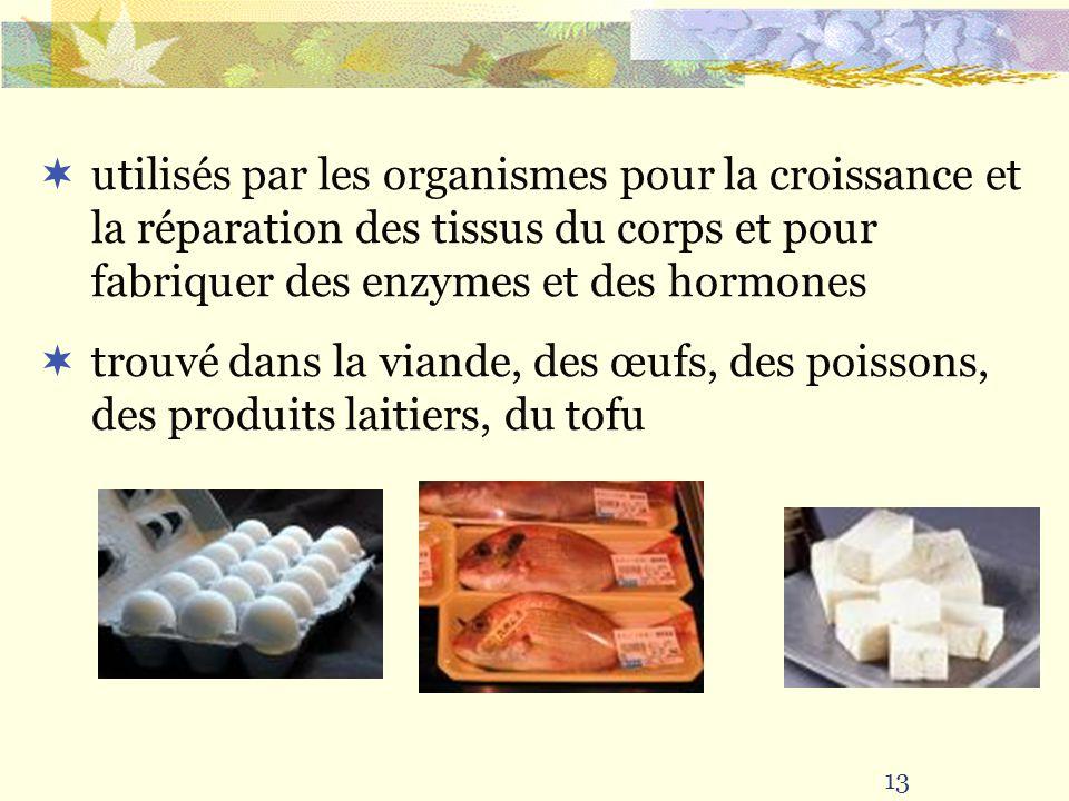 13 utilisés par les organismes pour la croissance et la réparation des tissus du corps et pour fabriquer des enzymes et des hormones trouvé dans la vi