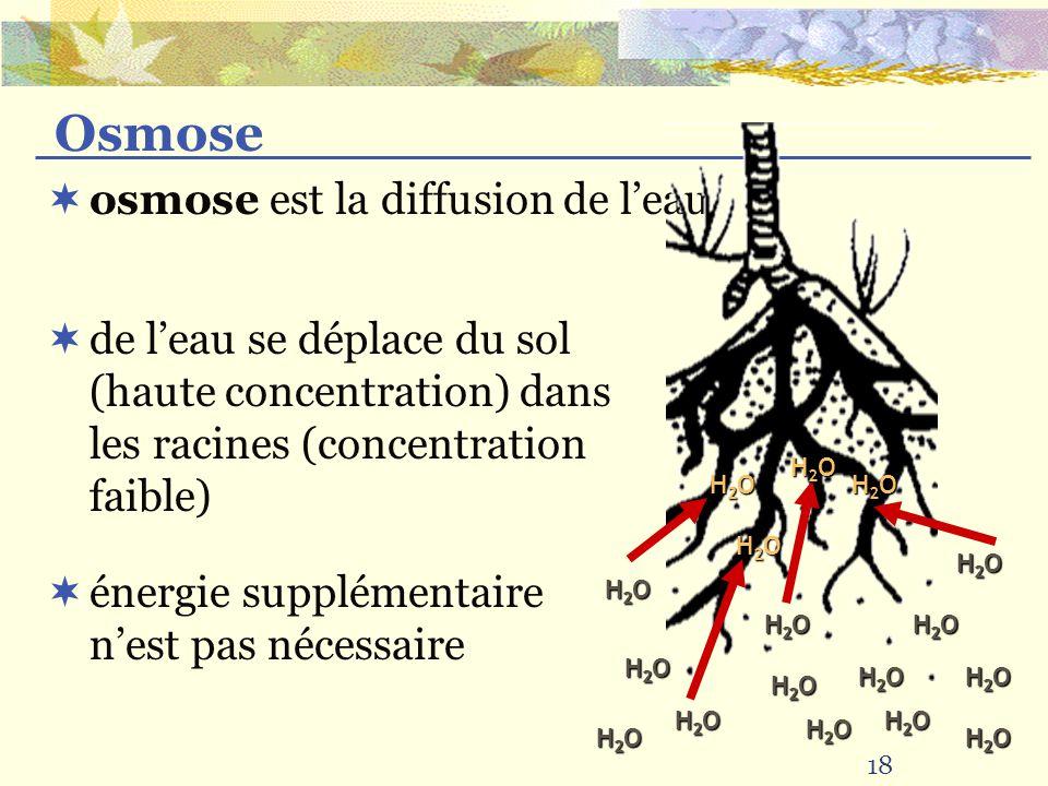 18 osmose est la diffusion de leau Osmose de leau se déplace du sol (haute concentration) dans les racines (concentration faible) énergie supplémentai