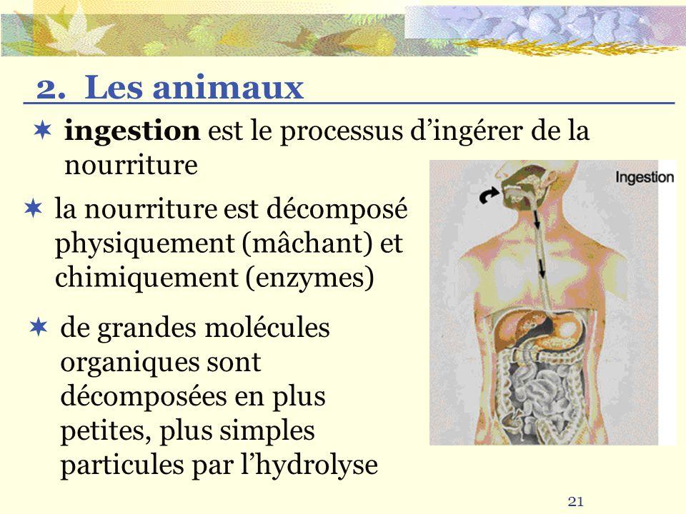 21 la nourriture est décomposé physiquement (mâchant) et chimiquement (enzymes) ingestion est le processus dingérer de la nourriture 2. Les animaux de