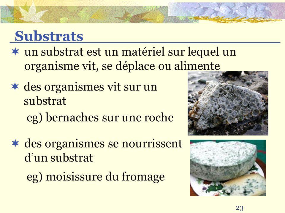 23 un substrat est un matériel sur lequel un organisme vit, se déplace ou alimente Substrats eg) bernaches sur une roche des organismes se nourrissent dun substrat eg) moisissure du fromage des organismes vit sur un substrat