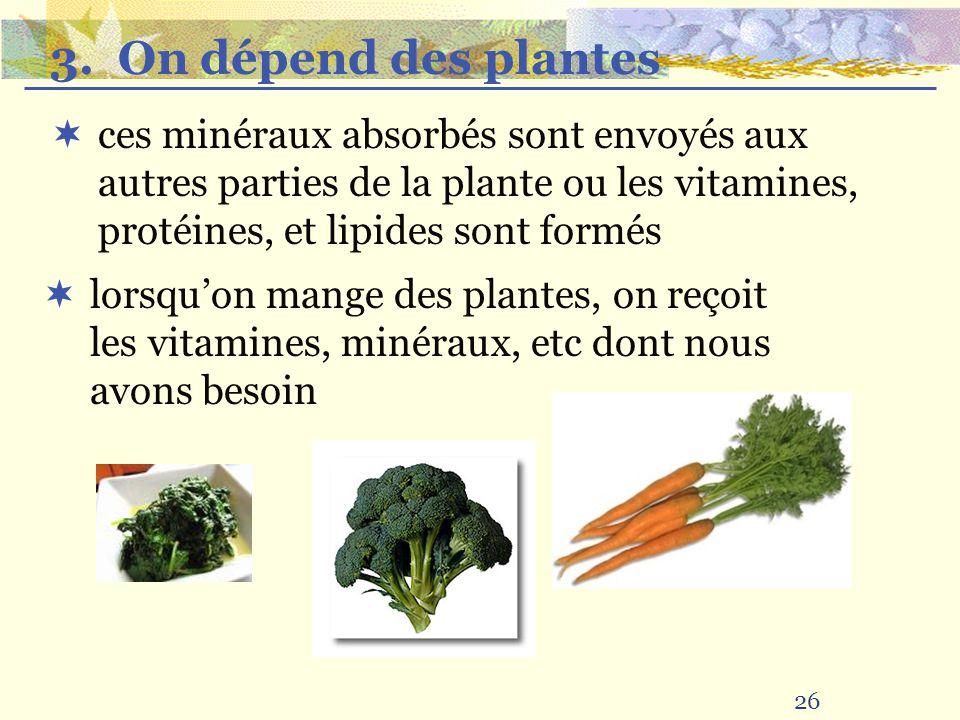 26 ces minéraux absorbés sont envoyés aux autres parties de la plante ou les vitamines, protéines, et lipides sont formés lorsquon mange des plantes,
