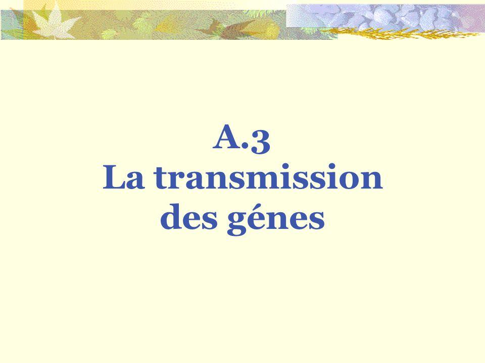 A.3 La transmission des génes