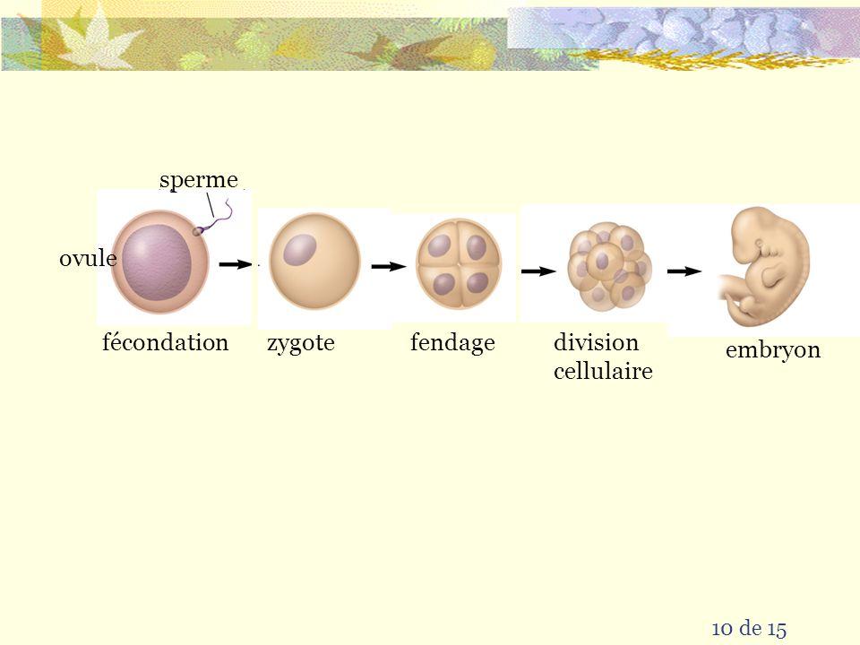le zygote est la et 9 de 15 le continue à et aurait et produit continue à se diviser première cellule de la progéniture une nouvelle forme de vie mult