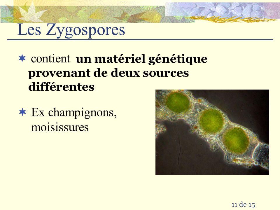 10 de 15 fécondationzygotefendagedivision cellulaire embryon sperme ovule
