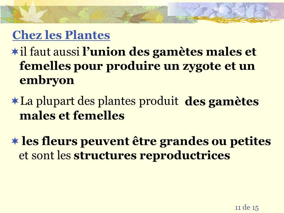 La conjugaison bactérienne forme primitive de la reproduction sexuée parce quil y a deux cellules parents ce processus permet le transfert du matériel