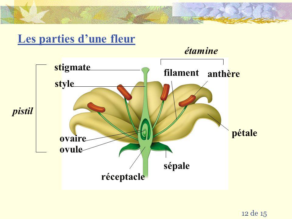 il faut aussi 11 de 15 et sont les La plupart des plantes produit Chez les Plantes lunion des gamètes males et femelles pour produire un zygote et un