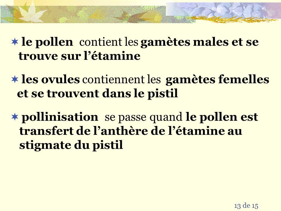 12 de 15 Les parties dune fleur stigmate style ovaire ovule pistil filament anthère pétale sépale réceptacle étamine