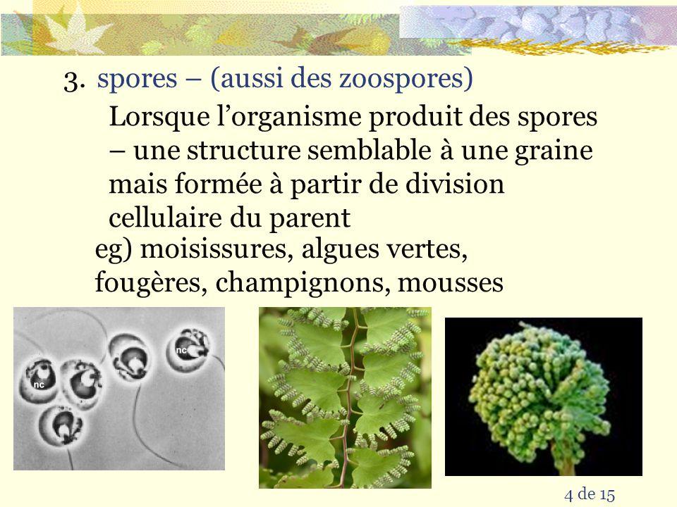 4 de 15 3.spores – (aussi des zoospores) Lorsque lorganisme produit des spores – une structure semblable à une graine mais formée à partir de division cellulaire du parent eg) moisissures, algues vertes, fougères, champignons, mousses