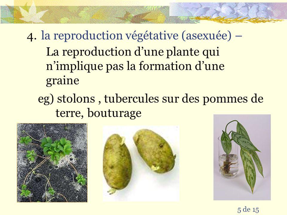 5 de 15 4.la reproduction végétative (asexuée) – La reproduction dune plante qui nimplique pas la formation dune graine eg) stolons, tubercules sur des pommes de terre, bouturage