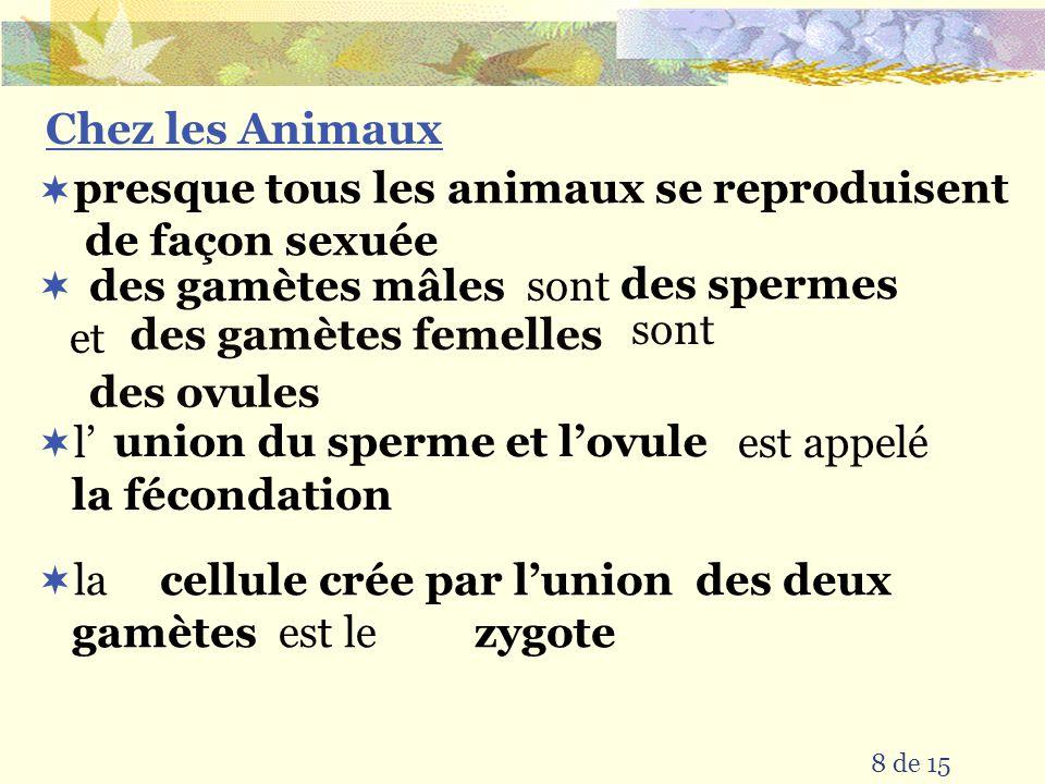 8 de 15 l est appelé sont et Chez les Animaux sont la est le presque tous les animaux se reproduisent de façon sexuée des ovules des gamètes femelles des spermes des gamètes mâles la fécondation union du sperme et lovule zygote cellule crée par lunion des deux gamètes