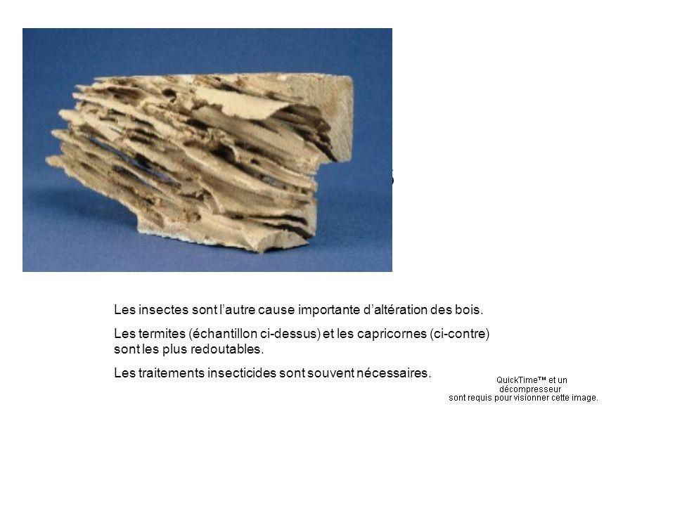 Termites Les insectes sont lautre cause importante daltération des bois. Les termites (échantillon ci-dessus) et les capricornes (ci-contre) sont les