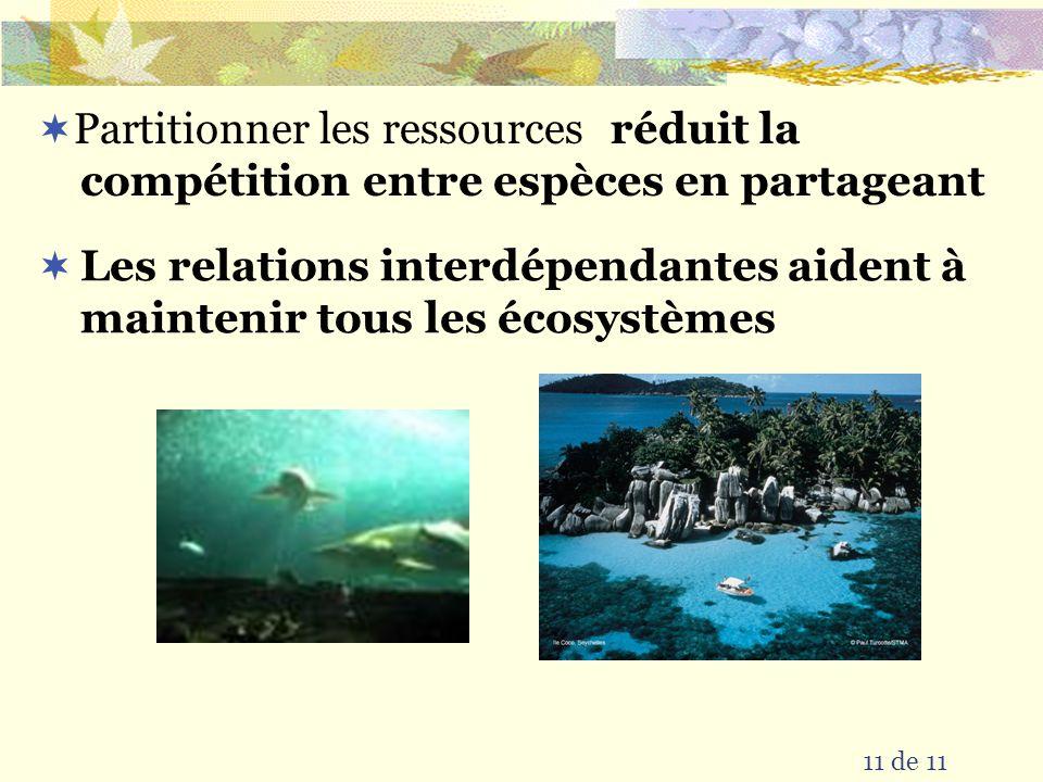 Partitionner les ressources 11 de 11 réduit la compétition entre espèces en partageant Les relations interdépendantes aident à maintenir tous les écosystèmes
