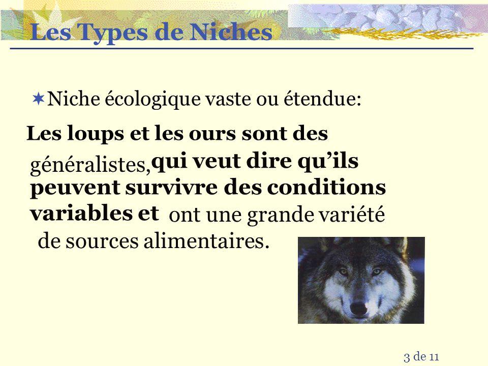 Les Types de Niches Niche écologique vaste ou étendue: Les loups et les ours sont des qui veut dire quils peuvent survivre des conditions variables et généralistes, ont une grande variété de sources alimentaires.