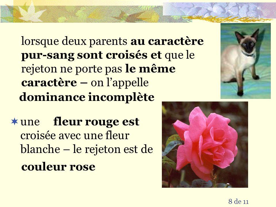 8 de 11 une croisée avec une fleur blanche – le rejeton est de dominance incomplète lorsque deux parents au caractère pur-sang sont croisés et que le