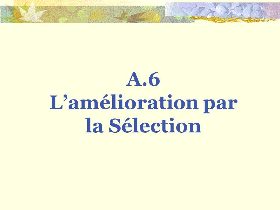 A.6 Lamélioration par la Sélection