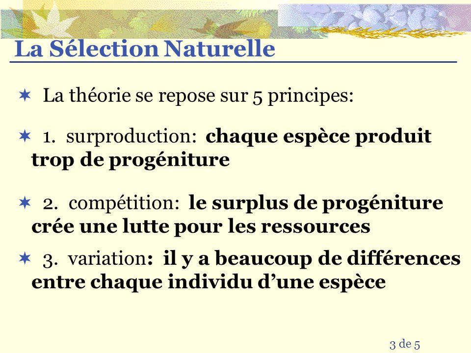 3 de 5 1. surproduction: chaque espèce produit trop de progéniture La théorie se repose sur 5 principes: La Sélection Naturelle 2. compétition: le sur