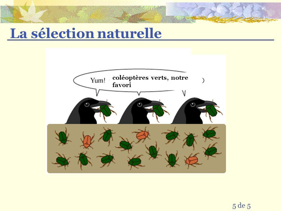 La sélection naturelle 5 de 5 coléoptères verts, notre favori