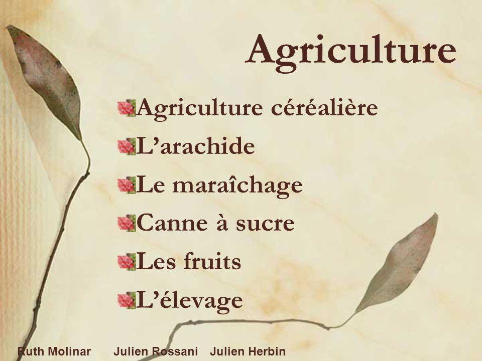 Agriculture Agriculture céréalière Larachide Le maraîchage Canne à sucre Les fruits Lélevage Ruth MolinarJulien RossaniJulien Herbin