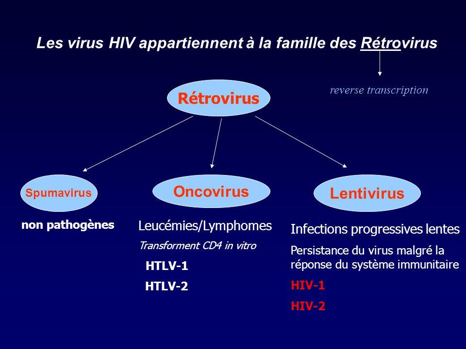 Les virus HIV appartiennent à la famille des Rétrovirus Rétrovirus Spumavirus Oncovirus Lentivirus non pathogènes Leucémies/Lymphomes Transforment CD4