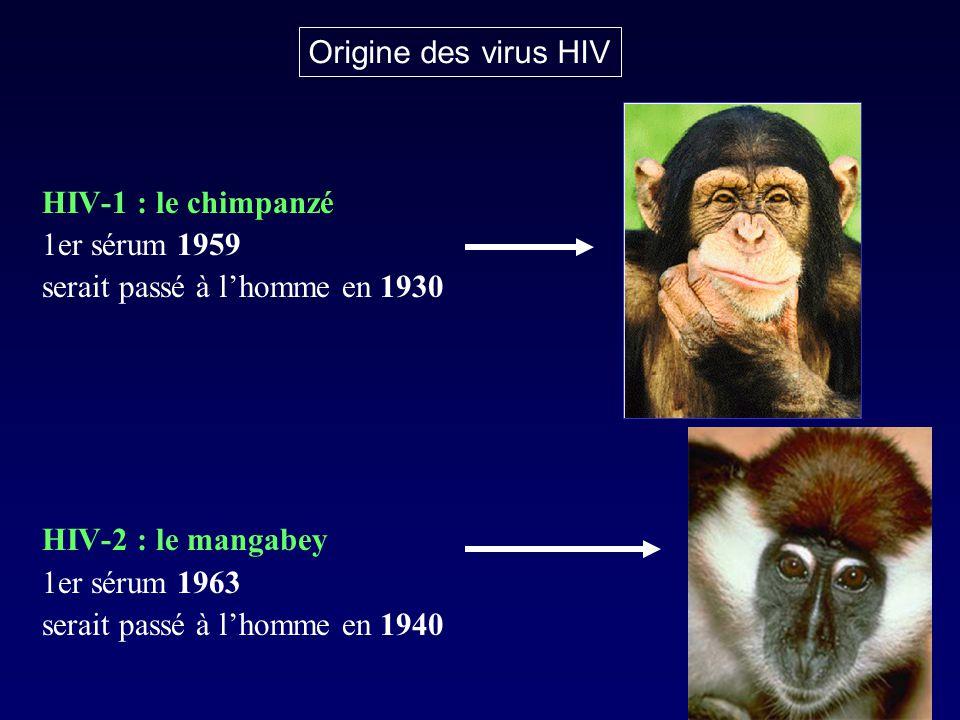 HIV-1 : le chimpanzé 1er sérum 1959 serait passé à lhomme en 1930 HIV-2 : le mangabey 1er sérum 1963 serait passé à lhomme en 1940 Origine des virus H
