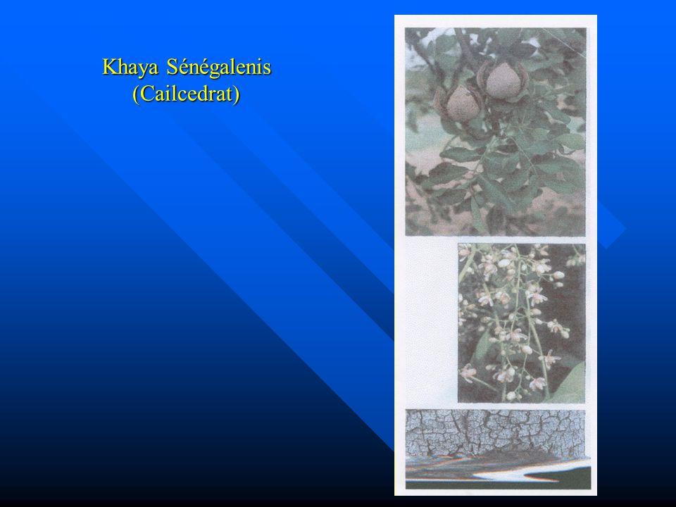 Comberetum Micranthum (Kinkéliba)