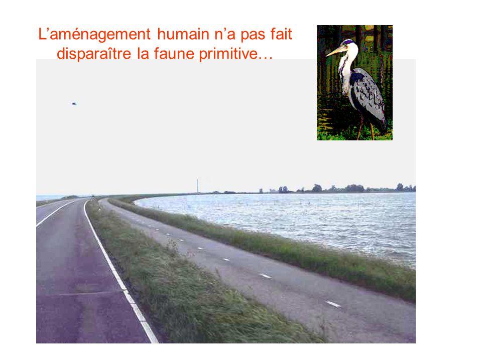 Laménagement humain na pas fait disparaître la faune primitive…