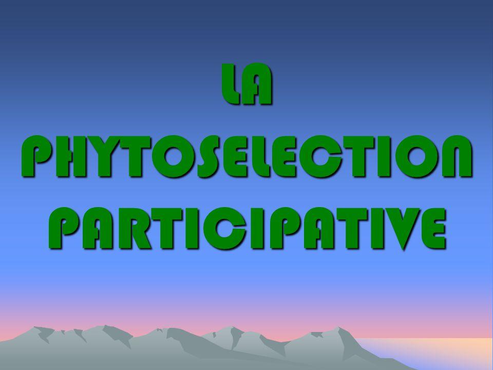 PLAN Principe de la phytosélection participative Principe de la phytosélection participative Processus de transfert : RTE Processus de transfert : RTE Conclusion Conclusion