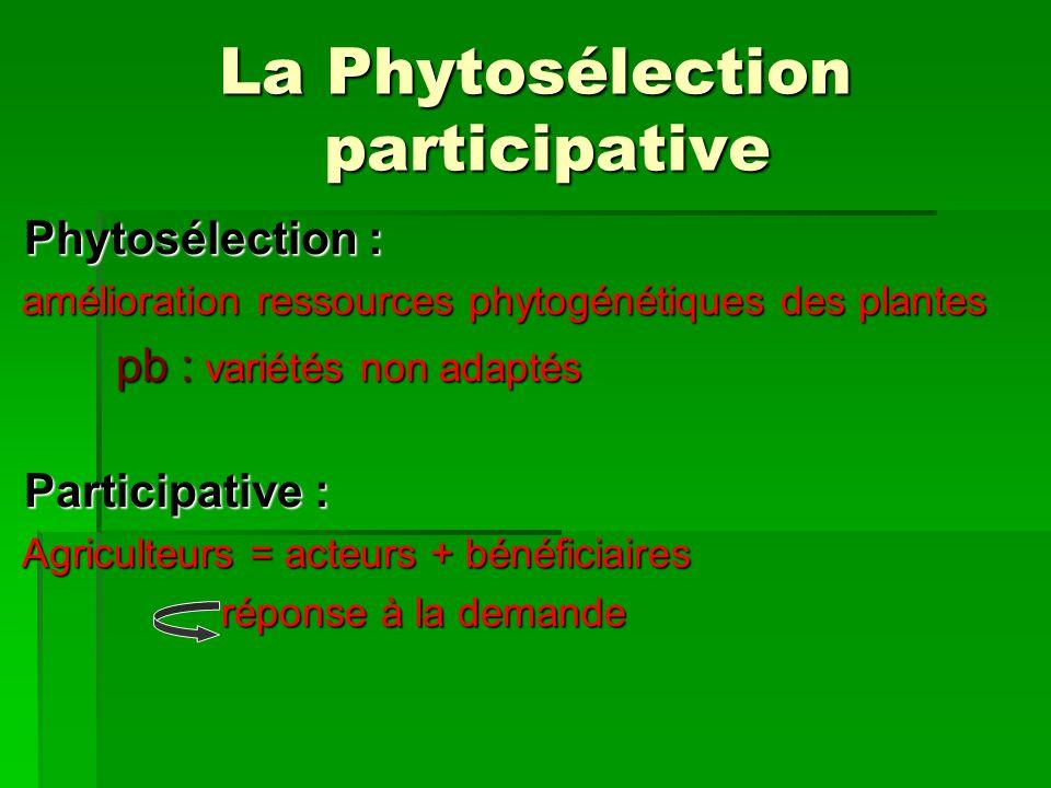 La Phytosélection participative Phytosélection : Phytosélection : amélioration ressources phytogénétiques des plantes amélioration ressources phytogén