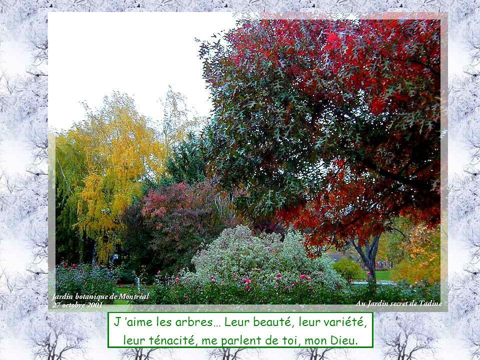 J aime les arbres… Leur beauté, leur variété, leur ténacité, me parlent de toi, mon Dieu.