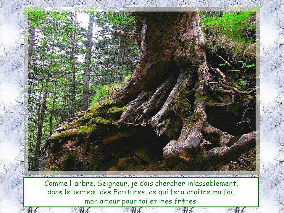 Comme l arbre, Seigneur, je dois chercher inlassablement, dans le terreau des Ecritures, ce qui fera croître ma foi, mon amour pour toi et mes frères.