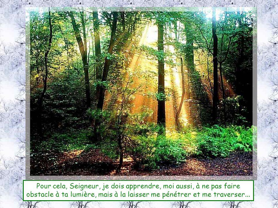 Pour cela, Seigneur, je dois apprendre, moi aussi, à ne pas faire obstacle à ta lumière, mais à la laisser me pénétrer et me traverser...