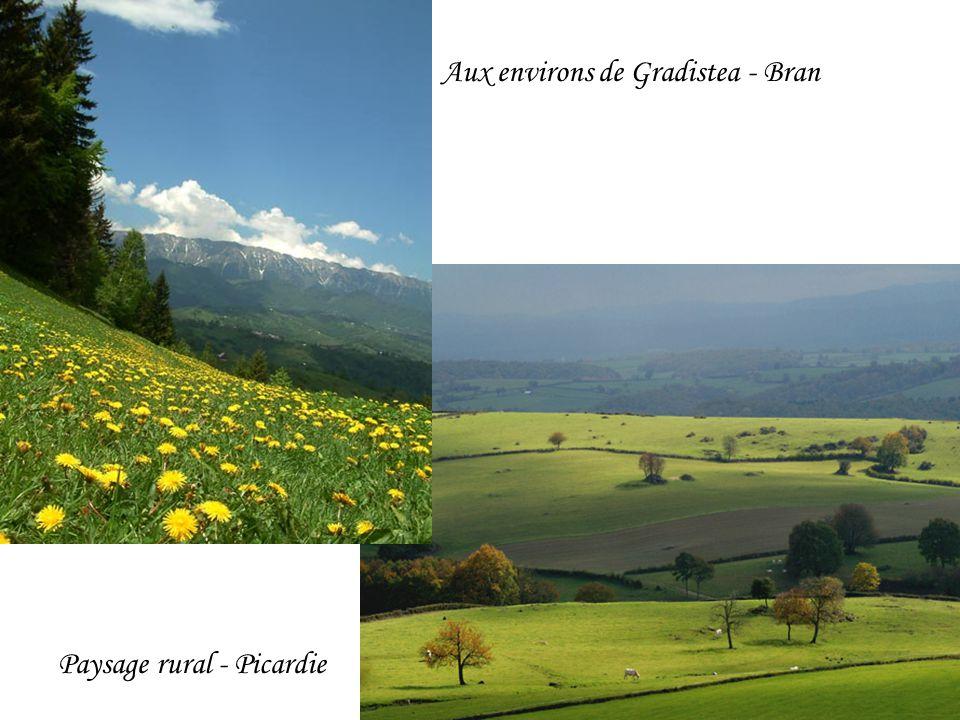 Paysage rural - Picardie Aux environs de Gradistea - Bran