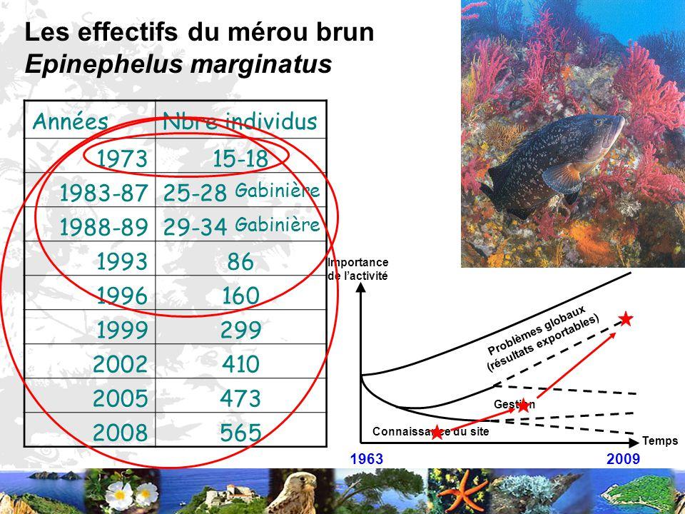 1963 2009 Temps Importance de lactivité Connaissance du site Gestion Problèmes globaux (résultats exportables) Les effectifs du mérou brun Epinephelus