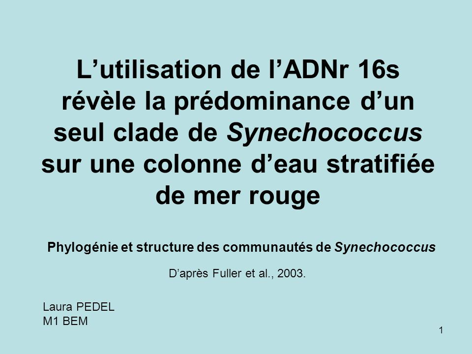 1 Lutilisation de lADNr 16s révèle la prédominance dun seul clade de Synechococcus sur une colonne deau stratifiée de mer rouge Phylogénie et structure des communautés de Synechococcus Daprès Fuller et al., 2003.